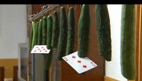 Sie sind das neue Messer: die guten Altenburger Spielkarten. (Foto)