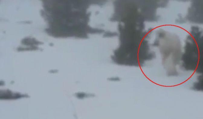 Sieht man hier einen Yeti? (Foto)