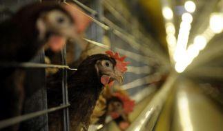Skandal um dioxinbelastete Lebensmittel weitet sich offenbar aus. (Foto)