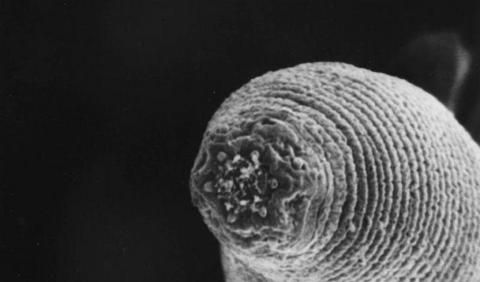 Skurrile neue Arten - Vom Fadenwurm bis Spongebob-Pilz (Foto)