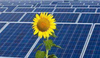 Solarförderung soll doch nicht gekürzt werden (Foto)
