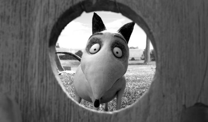 Sparky hat ein tolles Hundeleben, bis das Schicksal zuschlägt. (Foto)