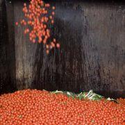 Sprit aus matschigen Tomaten, braunen Bananen und Salatabfall? Stuttgarter Forscher machen es möglich. Doch Kritik lässt nicht lange auf sich warten.