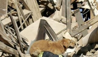 Spürhund Trümmerhund (Foto)