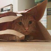 Staubsaugerlärm: Ein guter Grund, sich zu verstecken.