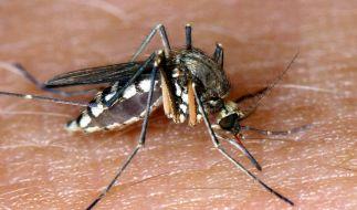 Stechmücken reagieren auf menschlichen Körpergeruch. (Foto)