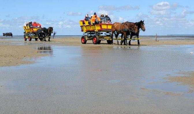 Stichwort: Das Wattenmeer (Foto)