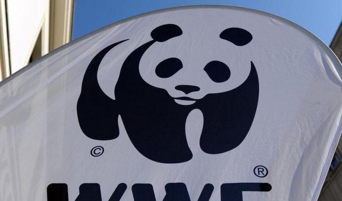 Streit zwischen  WWF und Buchautor eskaliert (Foto)