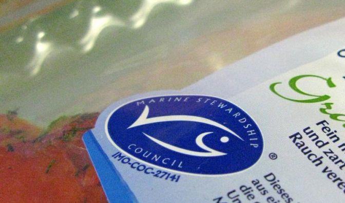 Studie: Fischsiegel MSC und FOS sind unzuverlässig (Foto)