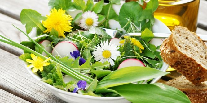 Heilpflanzen (Bild)