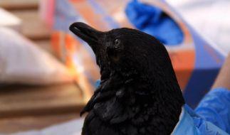 Tankriss: Angst vor Ölpest in Neuseeland (Foto)