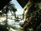 Tanne am Karibik-Strand: Natürlich ist das Bäumchen aus Plastik. (Foto)