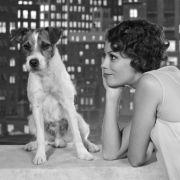 Heimlicher Star bei The Artist ist Filmhund Uggie.