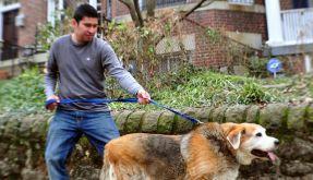 Tiere mit Problemzonen: US-Haustiere immer fetter (Foto)
