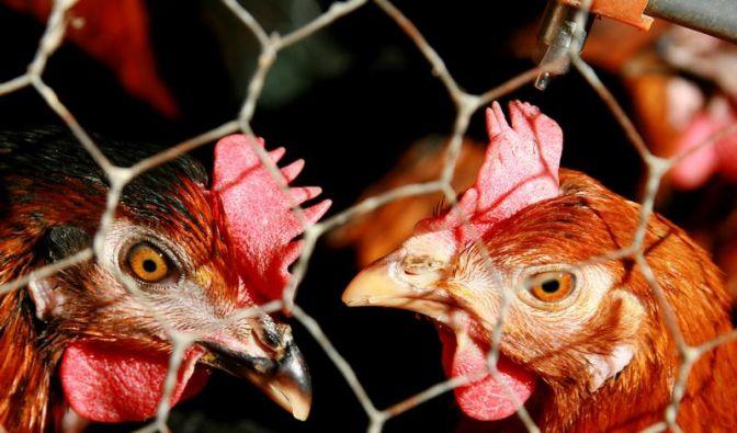 Tiere (Foto)