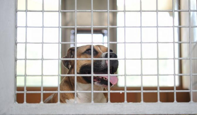 Tierpatenschaften - Hilfe für Vierbeiner in Not (Foto)