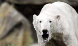 Tod von Knut (Foto)