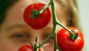 Tomate (Foto)