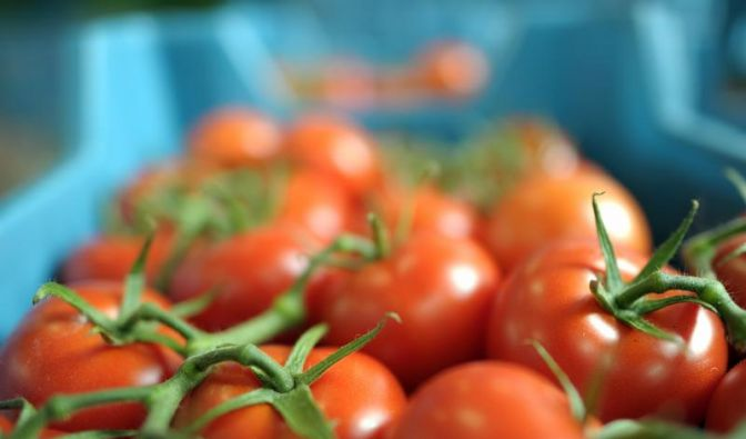 Tomaten in luftdurchlässigem Korb lagern (Foto)