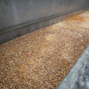 Schlimmer Verdacht! 10 Millionen verseuchte Eier im Umlauf (Foto)