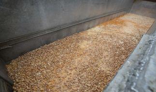Tonnenweise werden derzeit mit Fipronil verseuchte Eier vernichtet. (Foto)