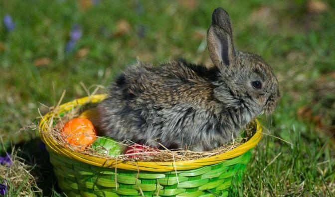 Traditionen zu Ostern - Lamm, Hase, Feuer und Ei (Foto)