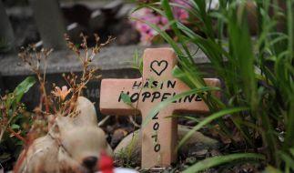 Trauer ums Haustier: Kindern die Wahrheit sagen (Foto)