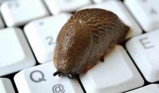 Trotz DSL mit Schneckentempo im Netz unterwegs? Meist liegt der Fehler an der Internetleitung. (Foto)