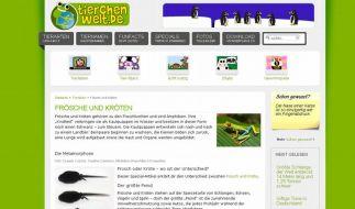 Über Frösche und Kröten: Online-Infos für Kinder (Foto)