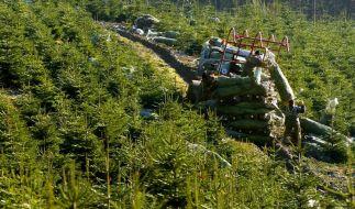 Umweltschonende Weihnachtsbäume kaufen (Foto)