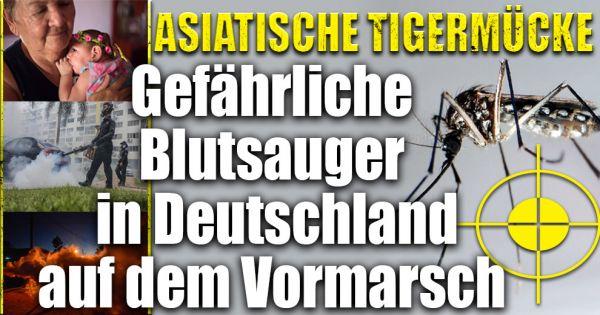 asiatische tigerm cke todbringende blutsauger berziehen. Black Bedroom Furniture Sets. Home Design Ideas