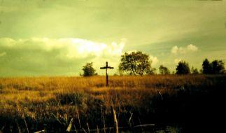 Venn-Kreuz (Foto)