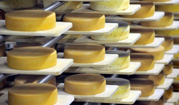 Verbraucherschützer warnen aktuell vor Käse, der mit Salmonellen belastet ist (Symbolbild). (Foto)