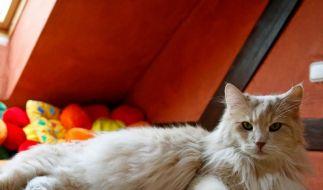 Vermieter darf Katzen und Hamster nicht verbieten (Foto)