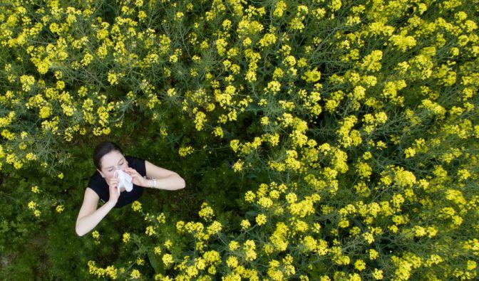 Pollensaison startet! Das müssen Sie jetzt unbedingt wissen (Foto)