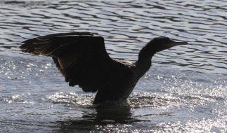 Vögel auf der Spree (Foto)
