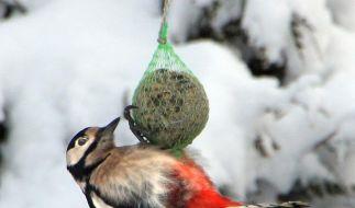 Vögel erst bei Schnee oder Forst füttern (Foto)