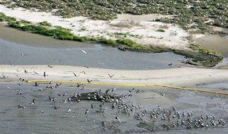 Vögel Ölpest (Foto)