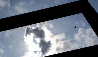 Vögel sind nach Flug gegen Fenster oft nur kurz benommen (Foto)