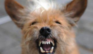 Vom Hund gebissen? Selbst Schuld! (Foto)