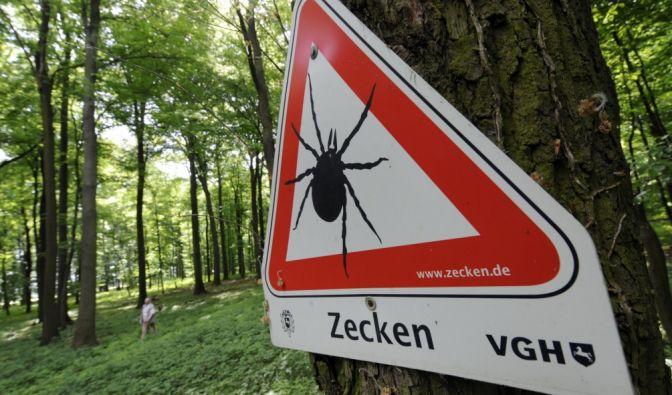 Vor allem der Süden Deutschlands zählt zu den FSME-Risikogebieten - das Virus wird hauptsächlich von Zecken übertragen. (Foto)