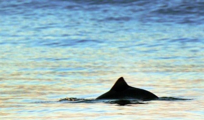 Walbeobachtungstouren auf der Ostsee gestartet (Foto)