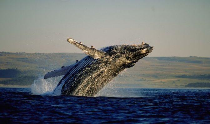 Wale beobachten (Foto)