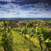 Das Wii-Wegli im Markgräfler Land bietet imposante Blicke über die Weinberge der Region.