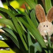 Warum der Osterhase bunte Eier bringt (Foto)