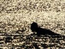 Wassertemperatur im Mittelmeer sinkt unter 20 Grad (Foto)