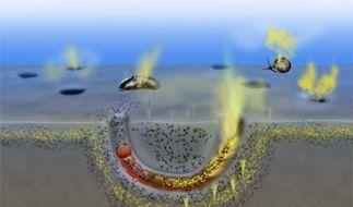 Wassertiere stoßen klimaschädliches Lachgas aus (Foto)