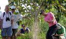 Der deutsche Golfprofi Martin Kaymer (r) muss sein Können auch direkt unter einem Baum vor mehreren Beobachtern beweisen. Foto: Ali Haider. Foto: dpa