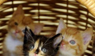 Wehrlose Kätzchen werden von den Usern brutal misshandelt. (Foto)