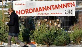 Weihnachtsbaumverkauf (Foto)